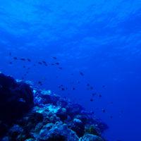 徳之島の海中